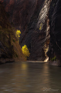 Zion Narrows, canyon, Zion National park, autumn, cottonwood trees, fall colors, Utah, slot canyon, Virgin River, landscape