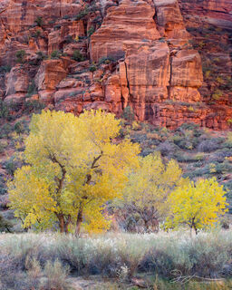 Canyon, Zion National park, autumn, cottonwood trees, fall colors, Utah, slot canyon, reflected light, grasses, landscape, small scene