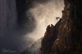 Lower Falls, Grand Canyon of the Yellowstone, Wyoming, Yellowstone national park, small scene, tree, mist, waterfall, backlit, landscape