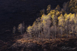Colorado, San Juan Mountains, County Road 7, aspens, autumn, small scene, landscape, trees, sunset, Ridgway, forest