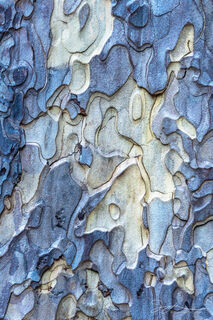 Yosemite National Park, abstract photography, autumn, California, ponderosa bark, blue hour, texture, pattern