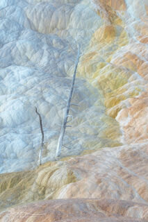 Mammoth Hot Springs, Palette Spring, tree, sunrise, small scene, landscape, Yellowstone National Park, terraces, Wyoming