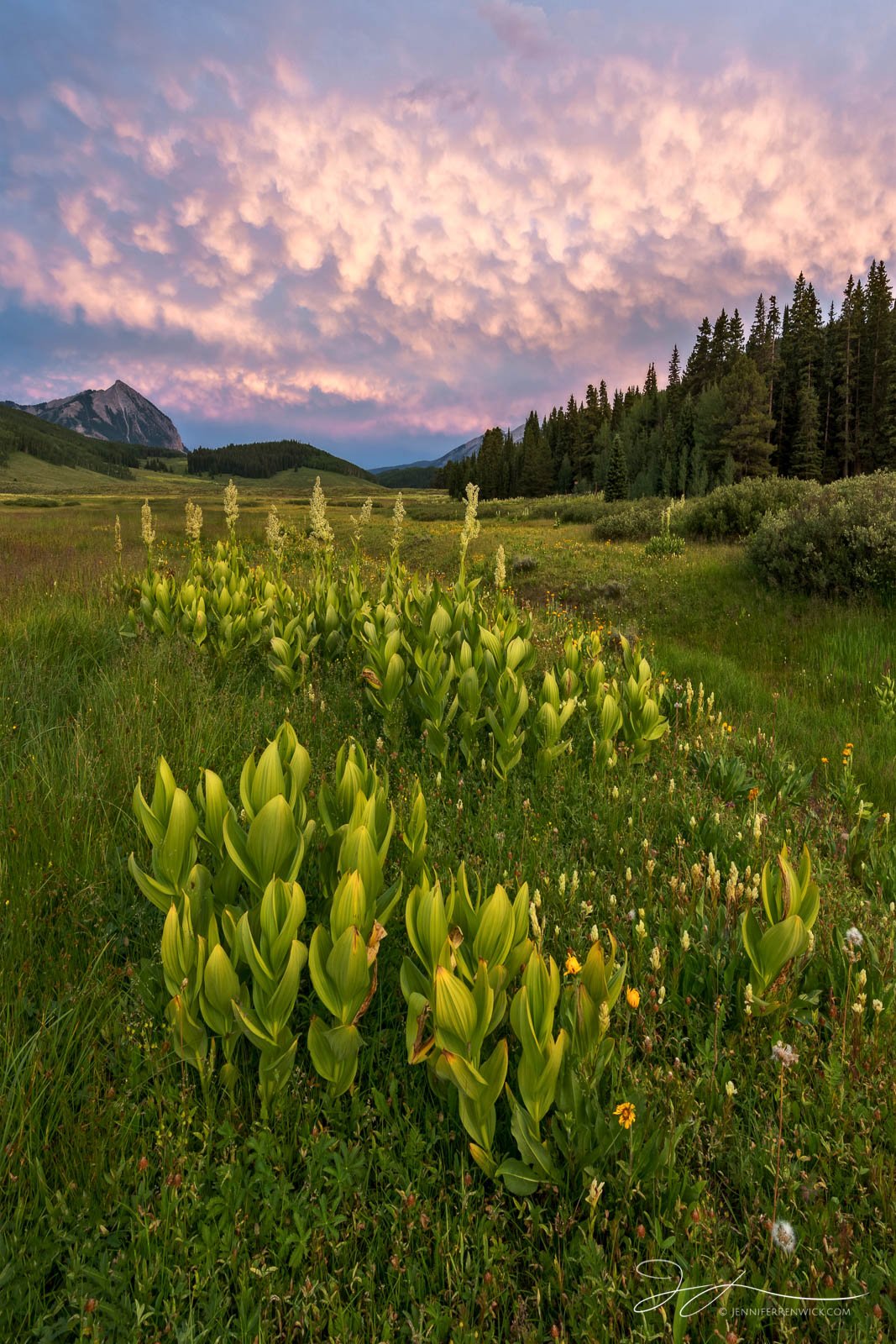 Colorado, Crested Butte, landscape, wildflowers, lupine, sunset, mountains, clouds, meadow, Elk Mountains, Washington Gulch, false hellebore, photo