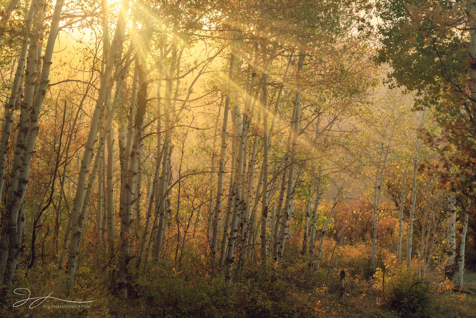 Sun rays bathe an autumn aspen forest with warm light.
