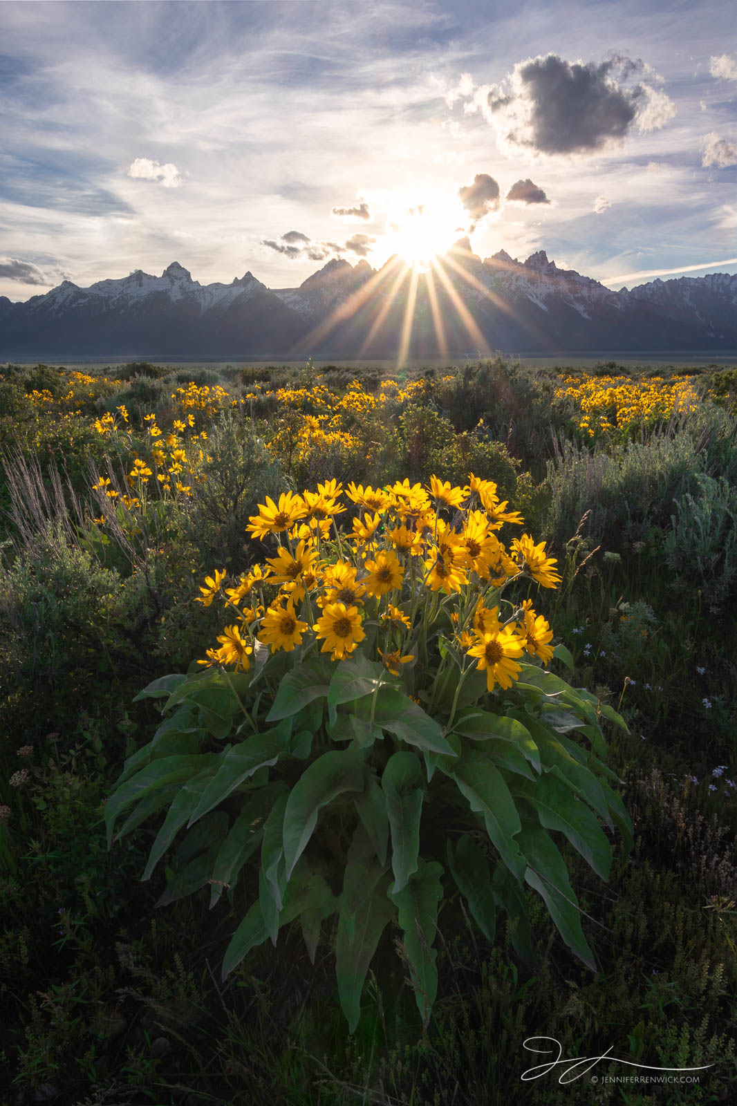 Arrowleaf Balsam root, Grand Teton National Park, Wyoming, mountains, landscape, wildflowers, sunset, clouds, Jackson Hole, Antelope Flats, Gros Ventre, sunburst, photo