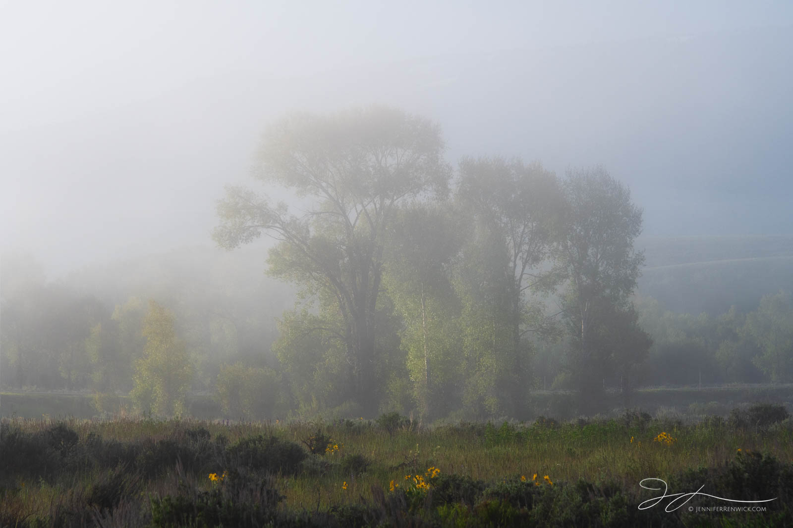A foggy morning surrounds flowers and cottonwood trees during a sunrise.