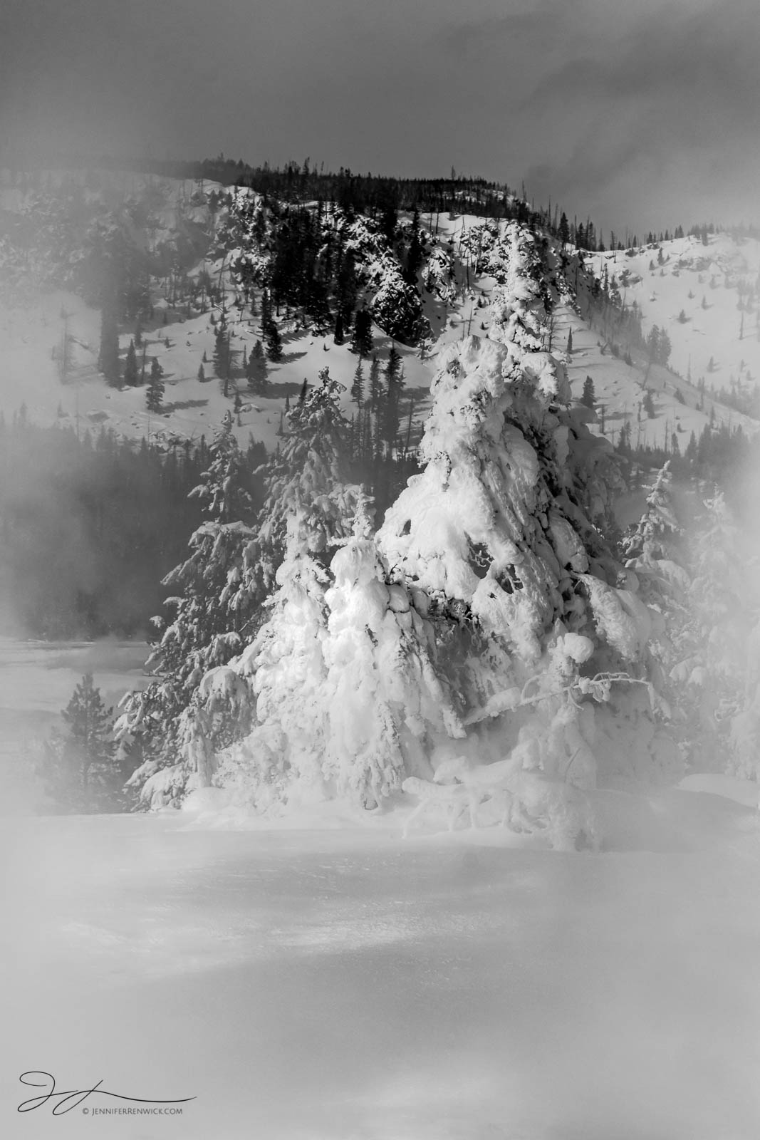 "A small stand of winter trees emerges out of a cloud of steam in Yellowstone National Park.  This image is part of my ""Winter..."