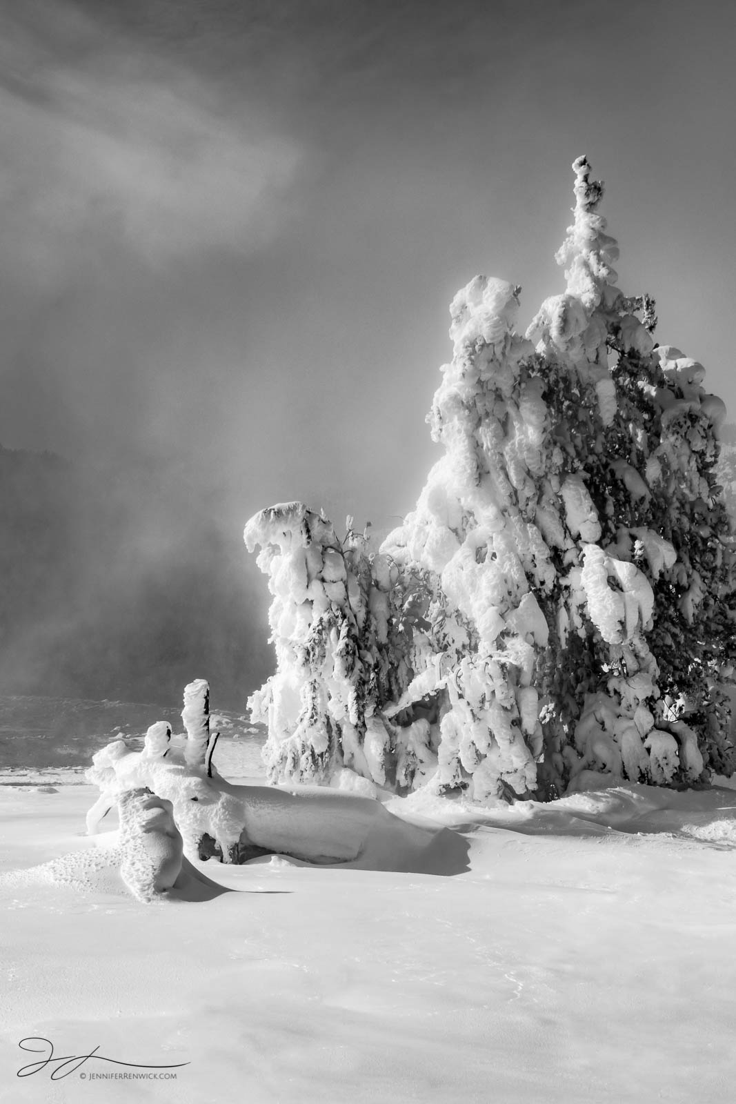 Yellowstone national park, winter, Wyoming, trees, thermal feature, snow, hot spring, Upper Geyser Basin, monochrome, black and white, landscape, steam, rime ice, photo