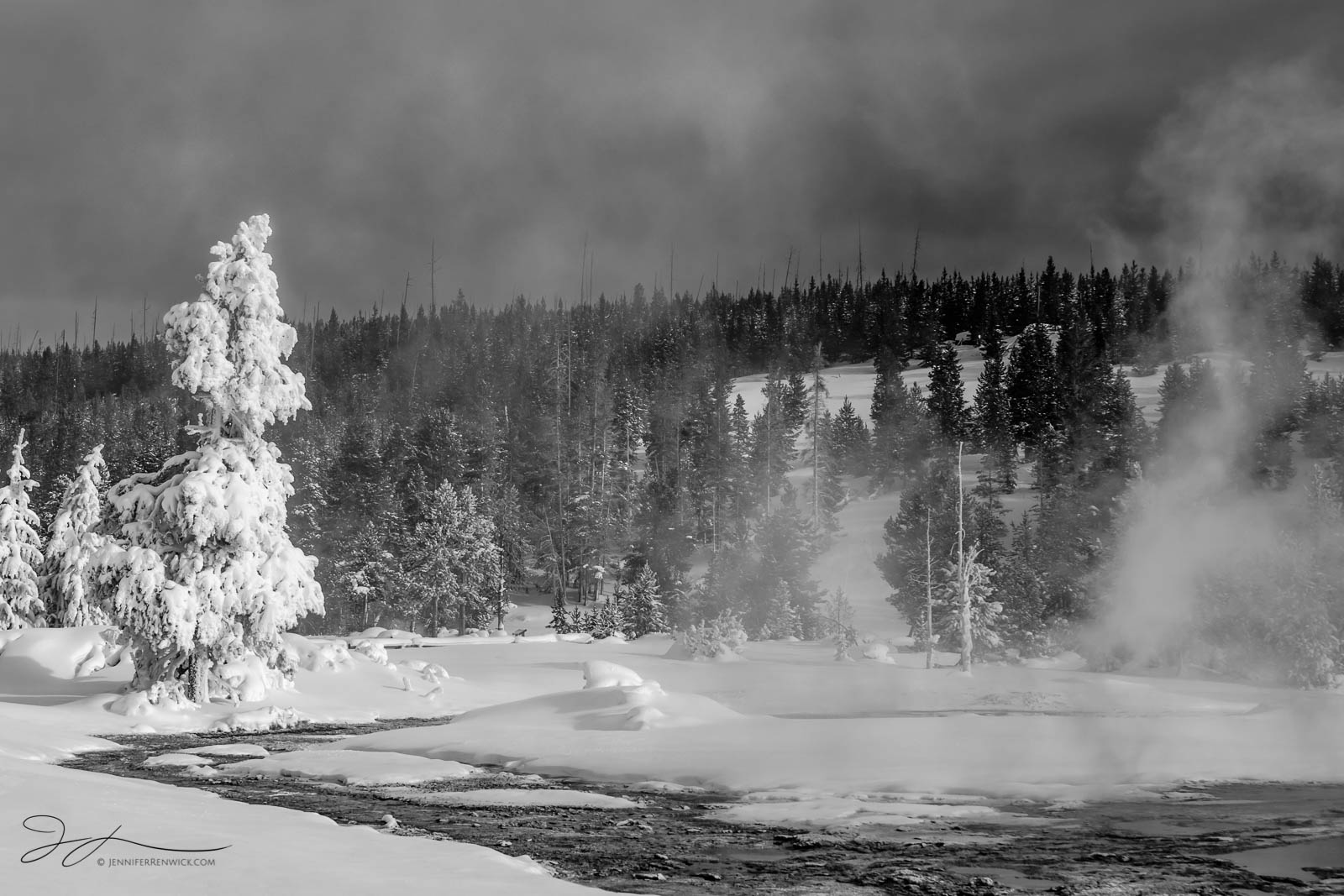 A winter tree and a plume of steam appear to be facing off near a thermal spring in Yellowstone National Park.  This image is...