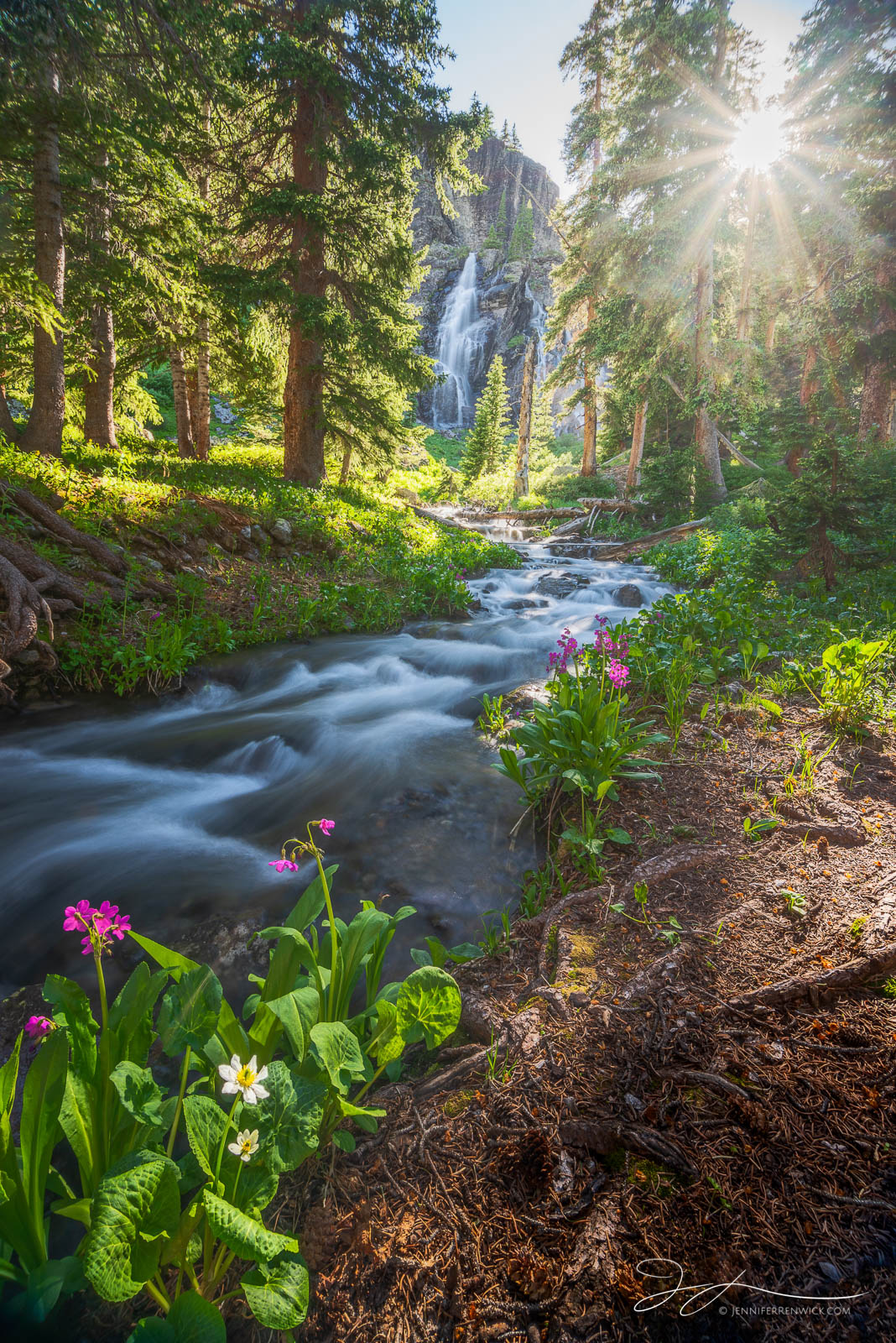 Colorado, forest, river, waterfall, wildflowers, alpine basin, San Juan Mountains, summer, photo