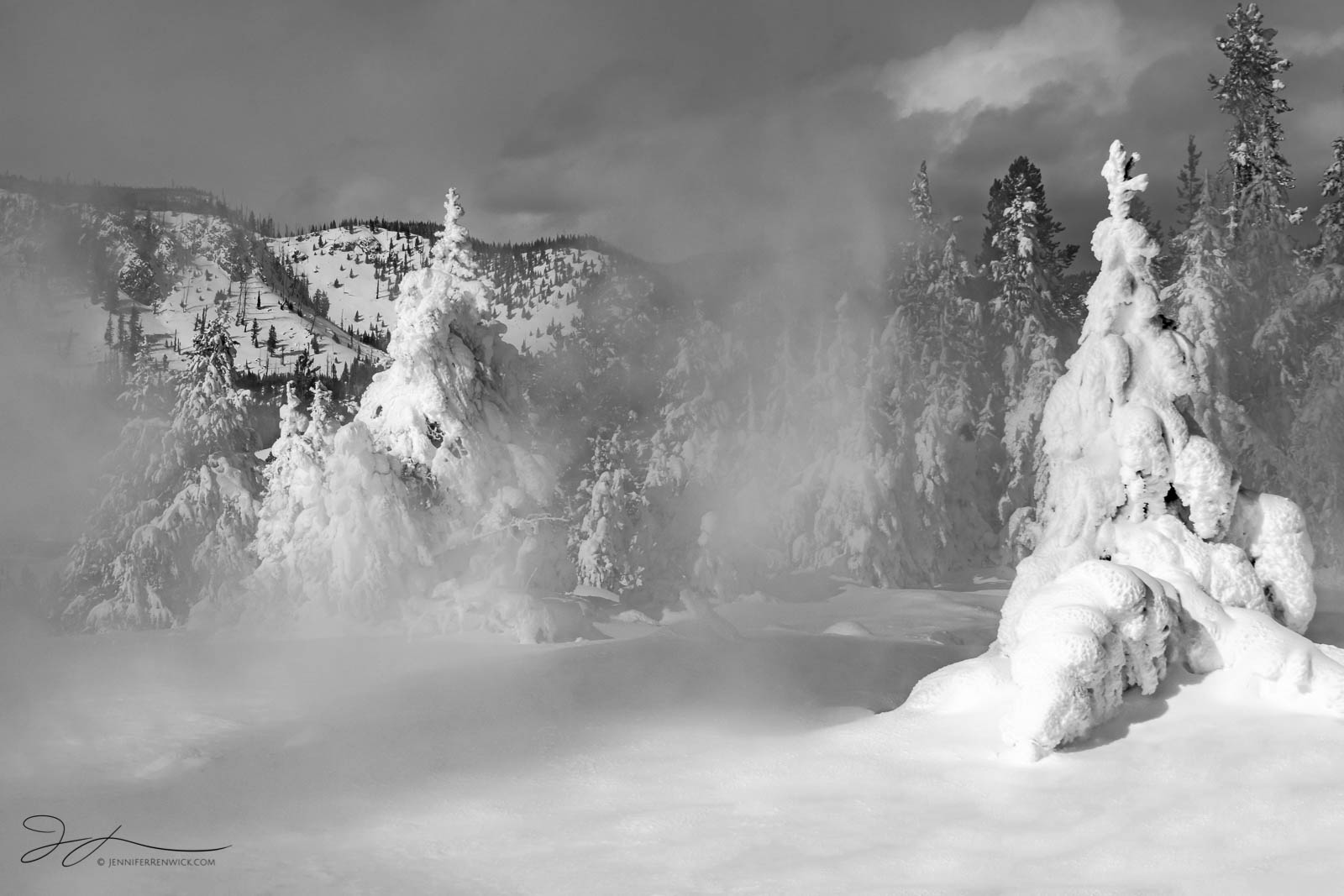 """Steam passes through two trees covered in rime ice and snow in Yellowstone National Park. This image is part of my """"Winter Statues..."""