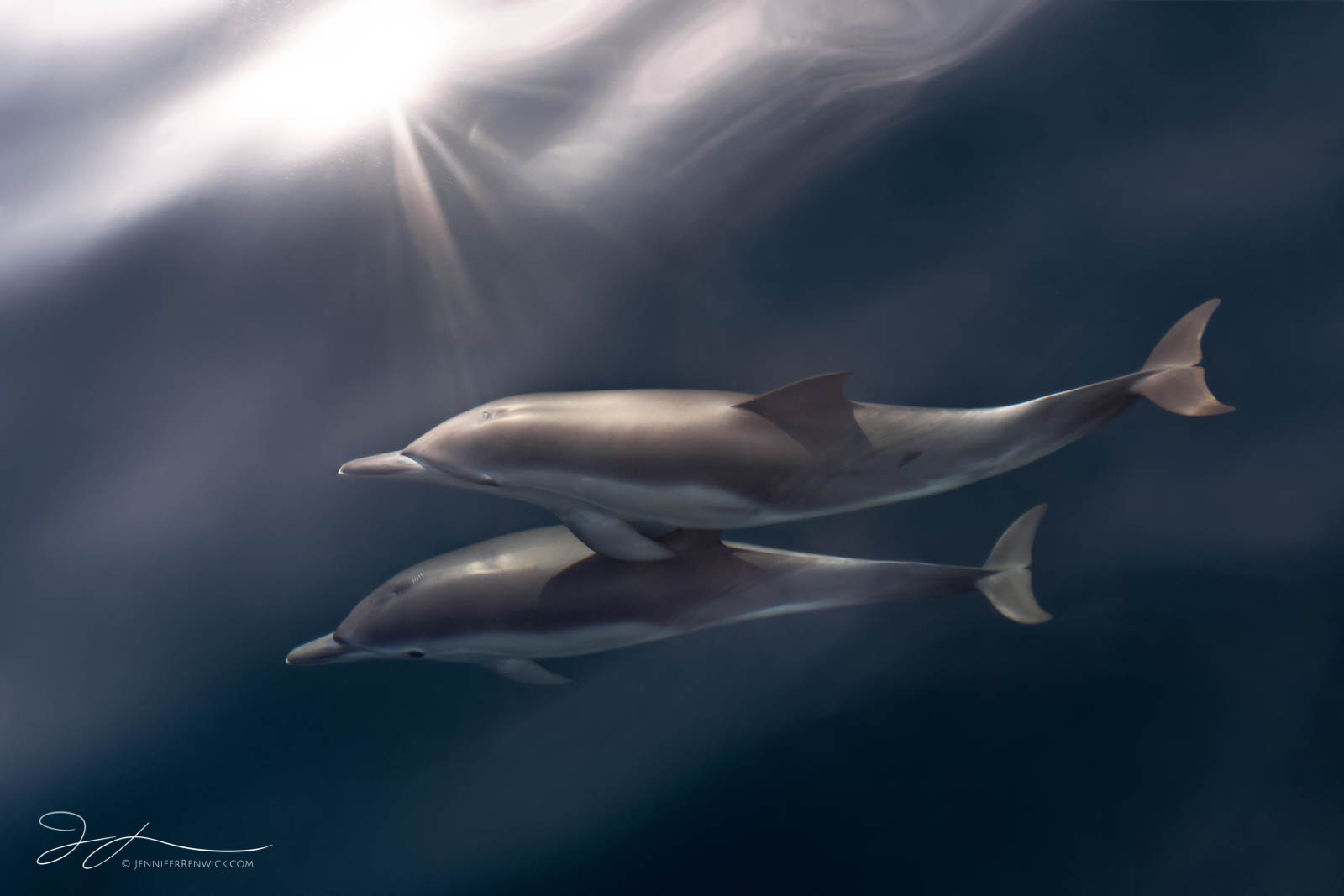 Two common dolphins glide together through a sea filled with light rays.