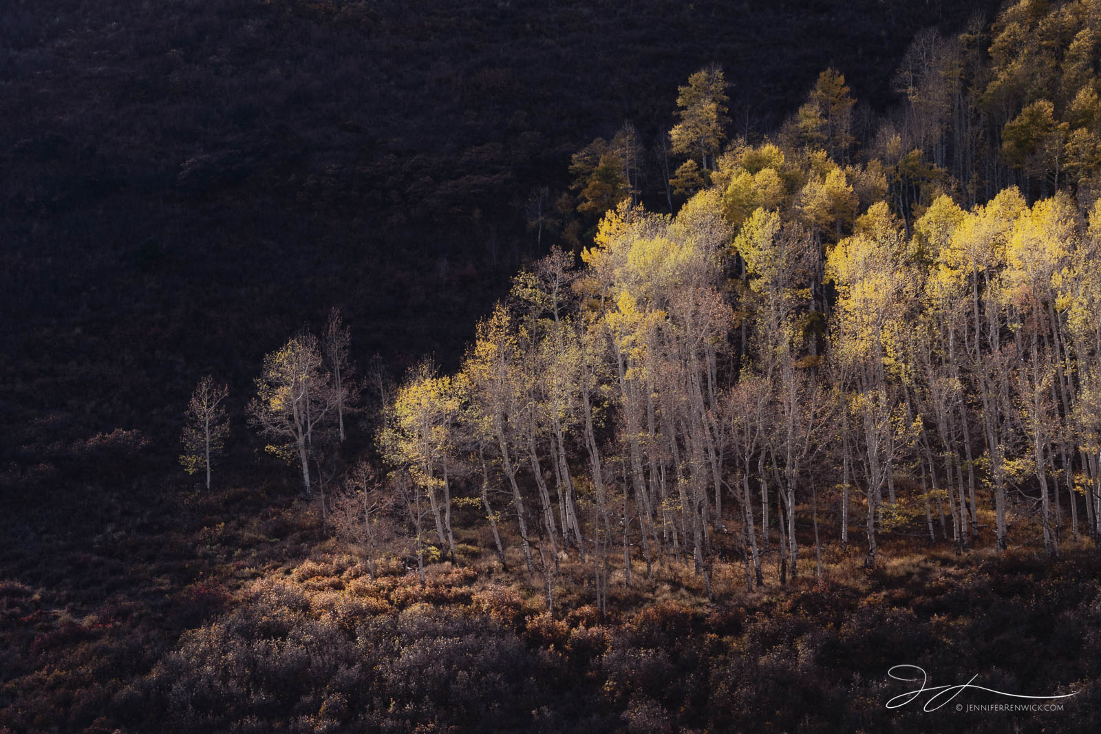 Colorado, San Juan Mountains, County Road 7, aspens, autumn, small scene, landscape, trees, sunset, Ridgway, forest, photo