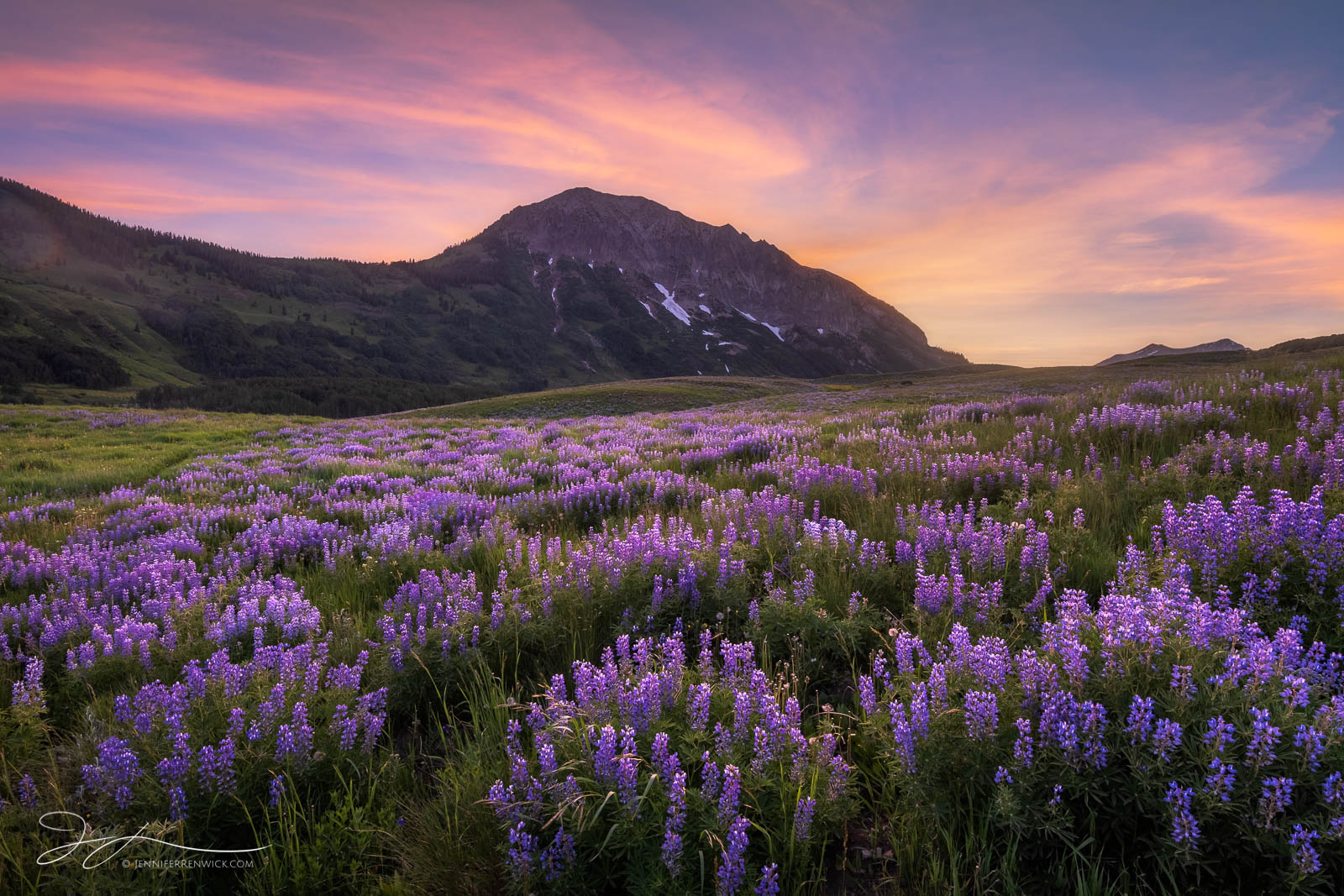 An explosion of lupine wildflowers covers a field during sunset near Gothic Mountain in Crested Butte.