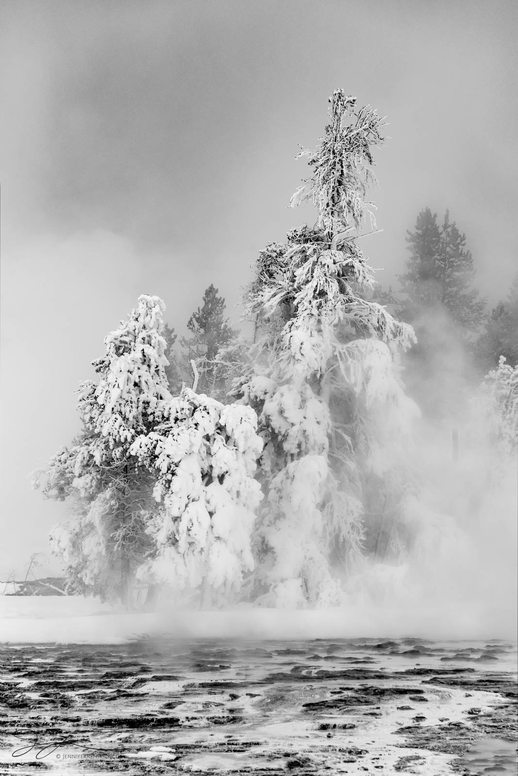 Winter trees in Yellowstone National Park appear to be marooned on a piece of land surrounded by thermal springs. This image...