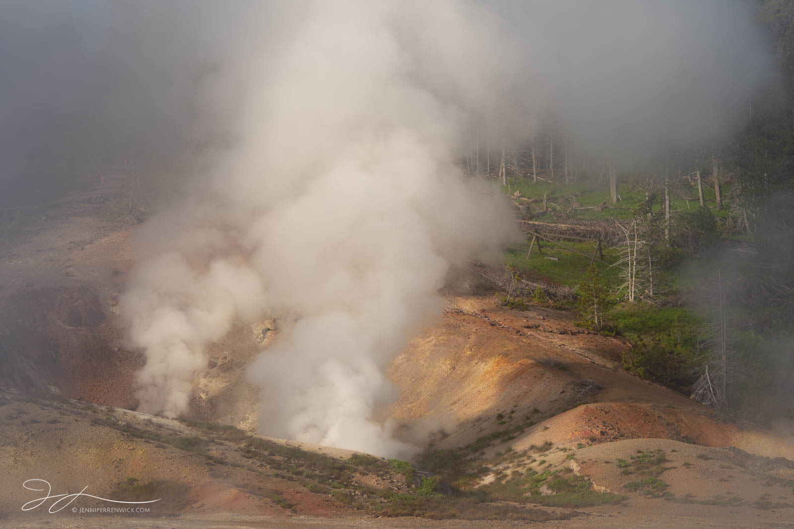 Valentine Geyser's steam catches the early morning light in Norris Geyser Basin.