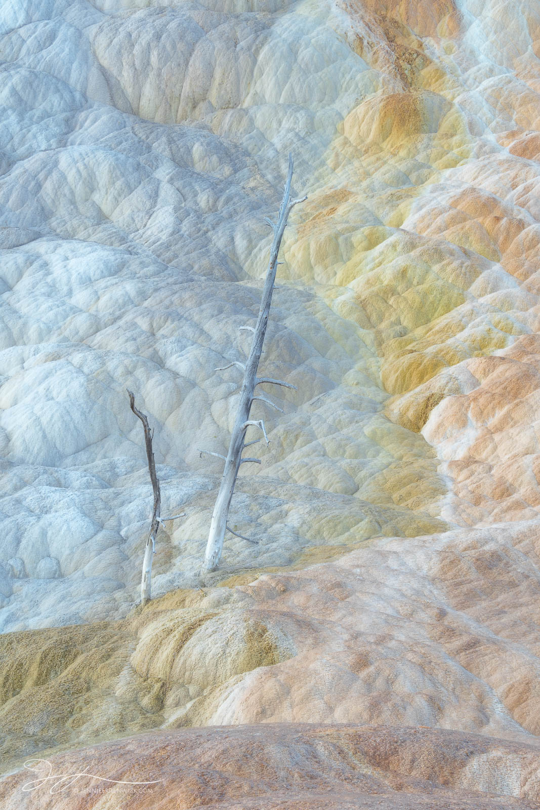 A dead tree stands among the colorful pastel terraces of Mammoth Hot Springs.