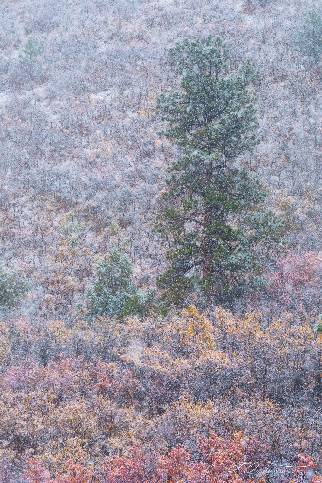 Colorado, Ridgway, autumn, landscape, scrub oak, mountains, clearing storm, forest, aspens, San Juan Mountains, snowstorm, snow, small scene, photo