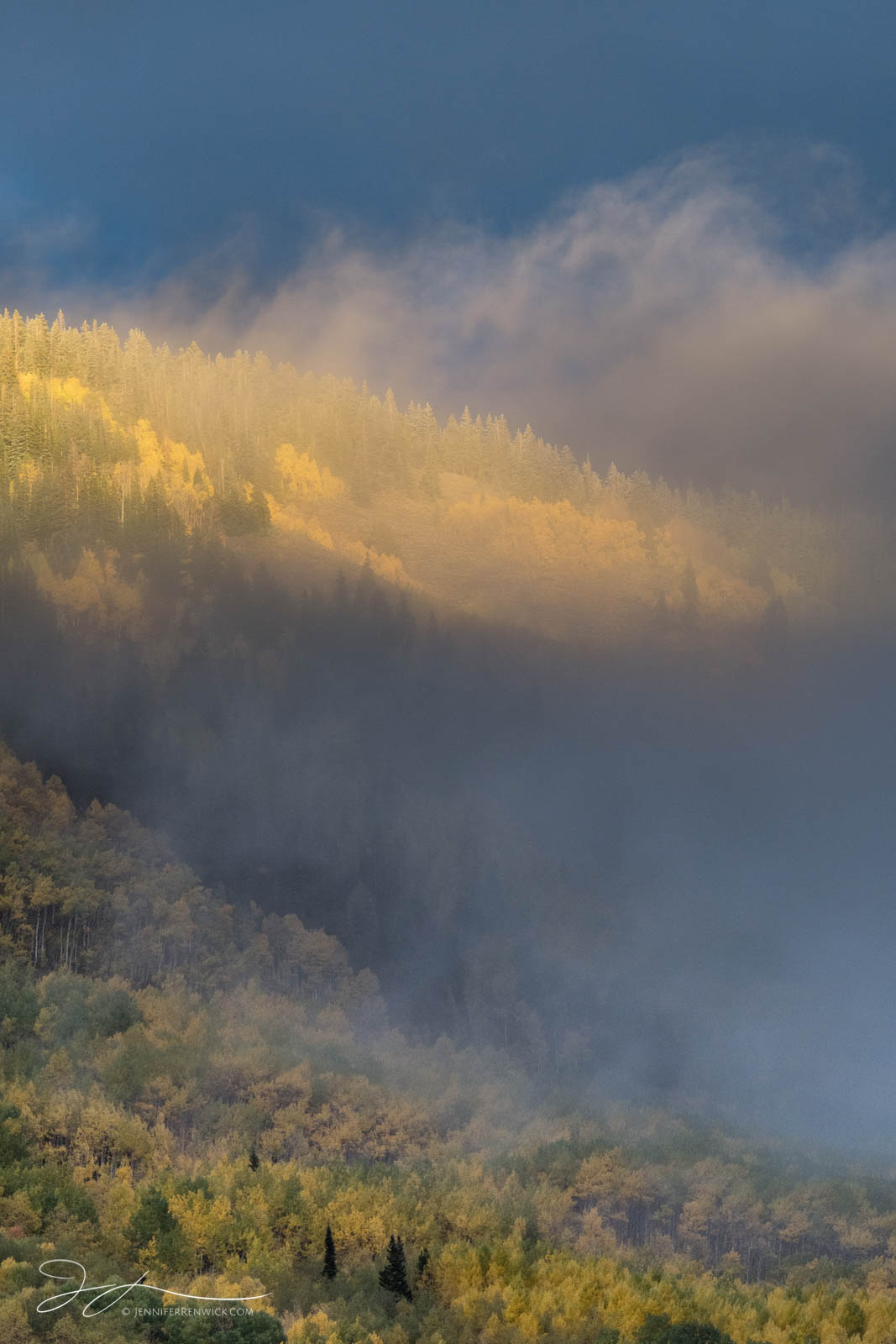 A hillside of aspen trees lights up during a clearing autumn storm.