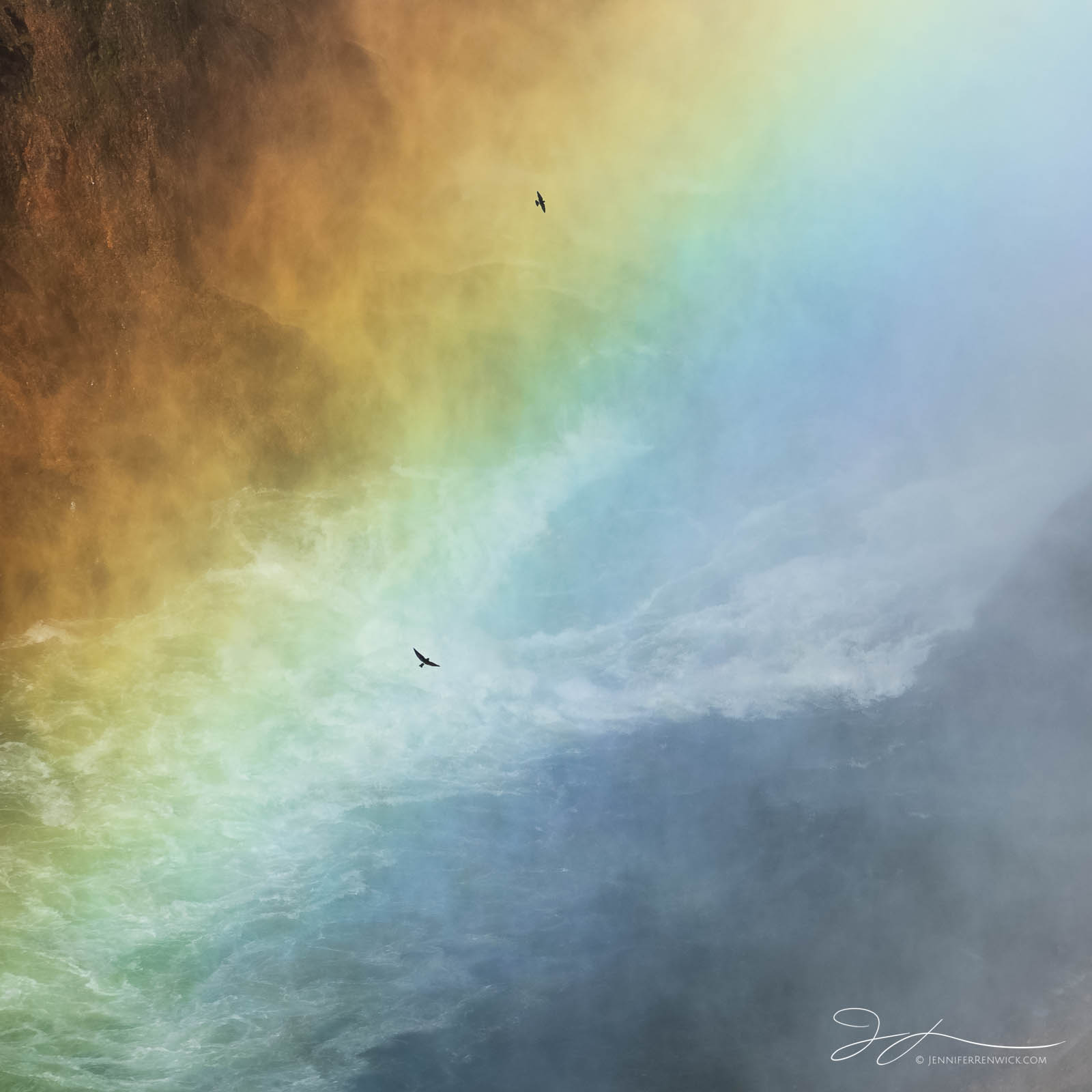 Violet-green swallows fly in and out of a rainbow created by a waterfall.