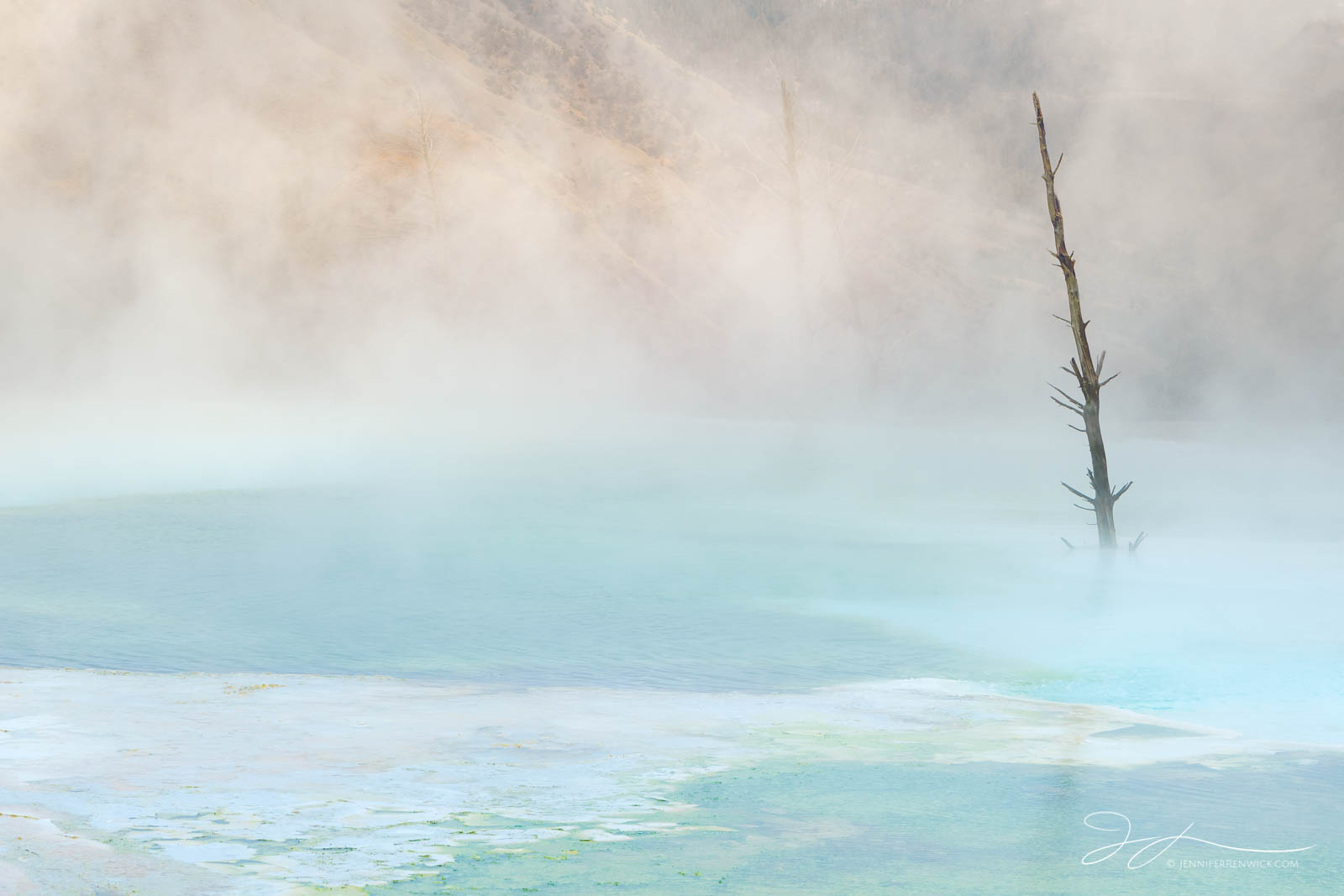 Yellowstone national park, canary spring, hot springs, landscape, mammoth hot springs, morning, steam, terraces, tree, upper terraces, wyoming, photo