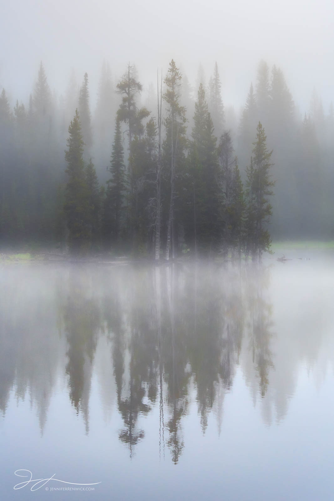 A stand of trees reflects in a pond on a foggy morning in Yellowstone National Park.