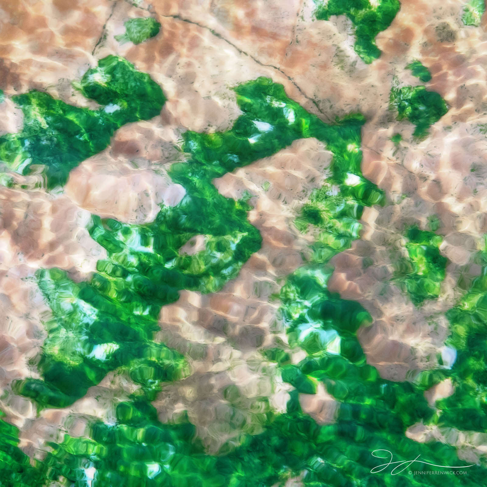 Green bacteria and moving water create a painterly scene.