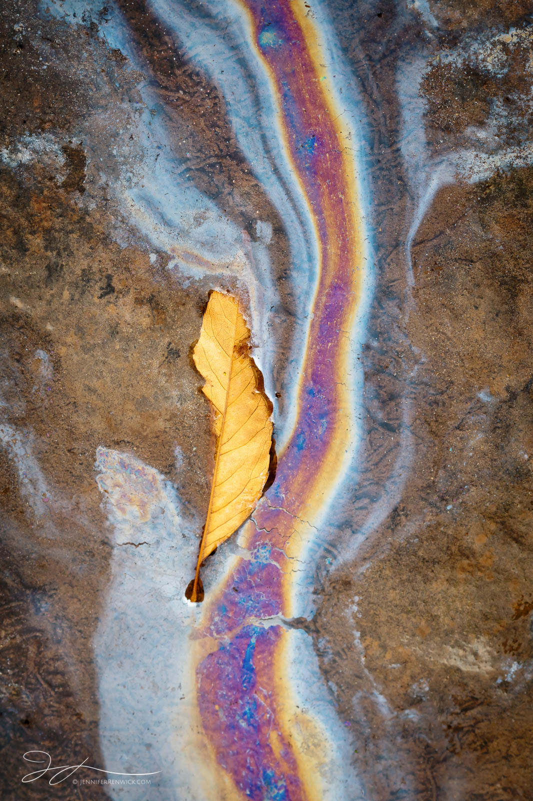 "A decaying leaf in a puddle leaves behind a colorful natural slick of oils. This image is part of my ""One Final Show "" photo..."