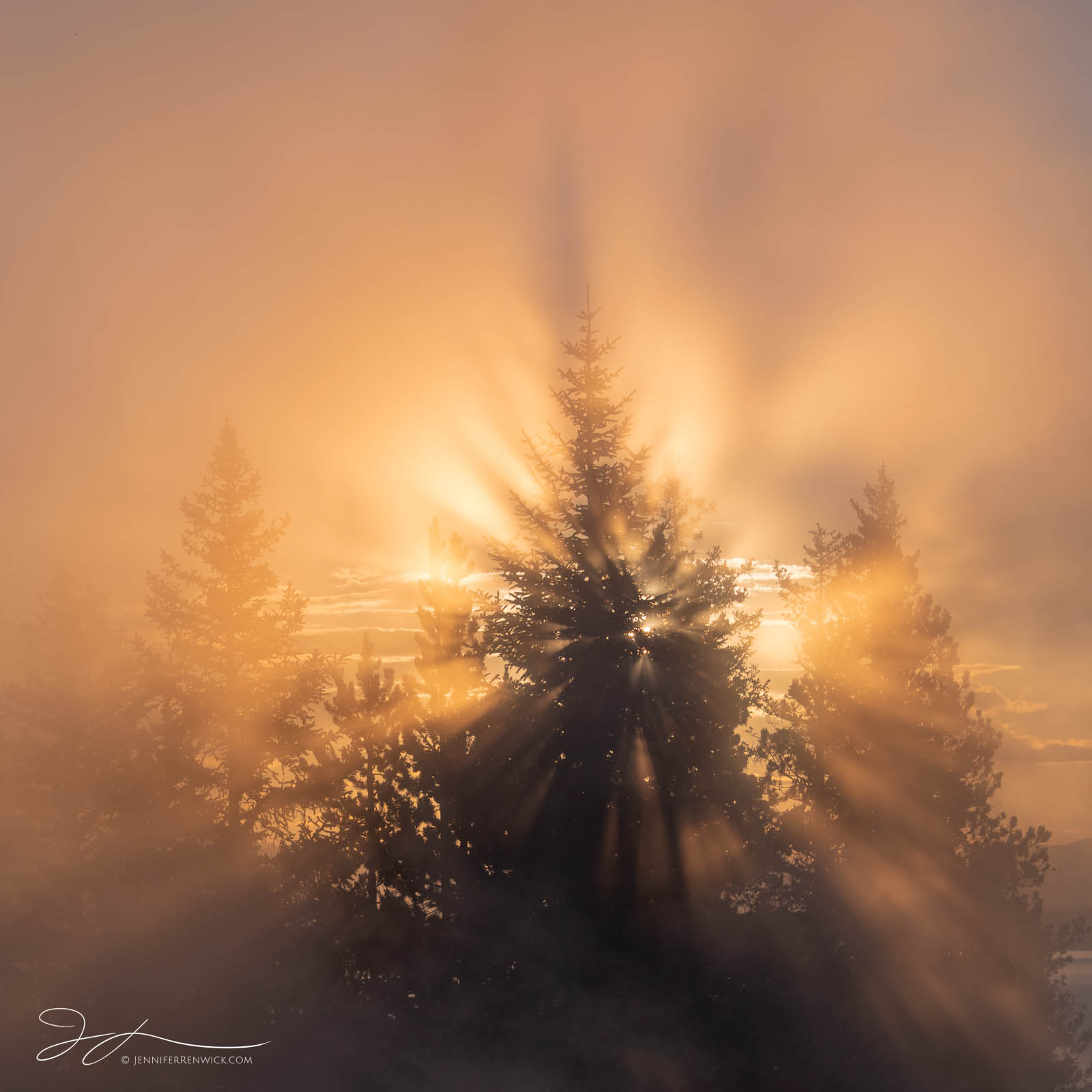The rising sun creates beams of light through the steam in West Thumb Geyser Basin.
