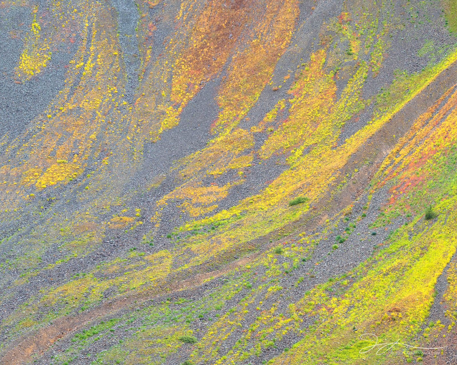 Colorful, autumn tundra covers the scree fields up in a high alpine basin in Colorado.